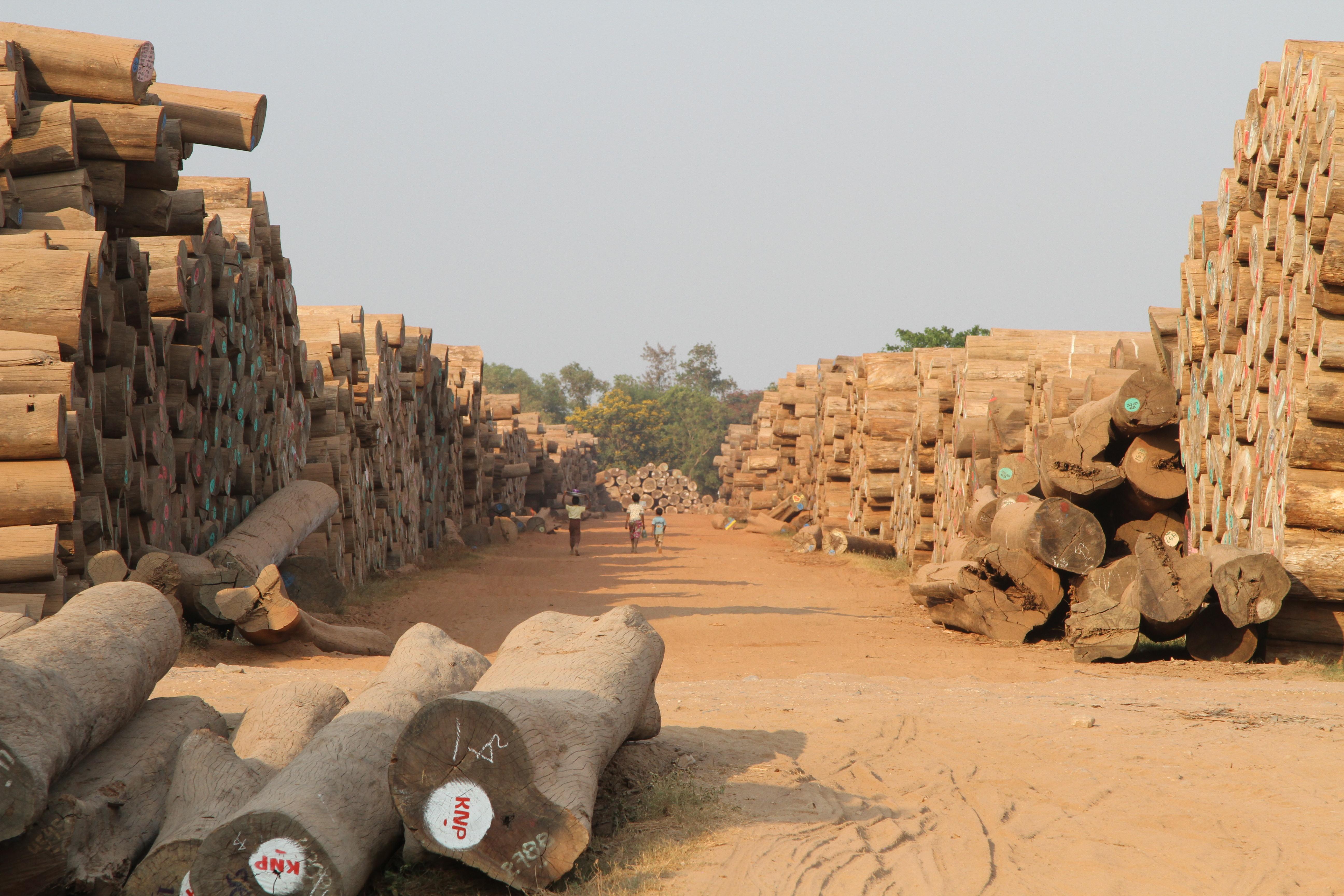 Danske virksomheder importerer træ ulovligt fra Myanmar – én er politianmeldt