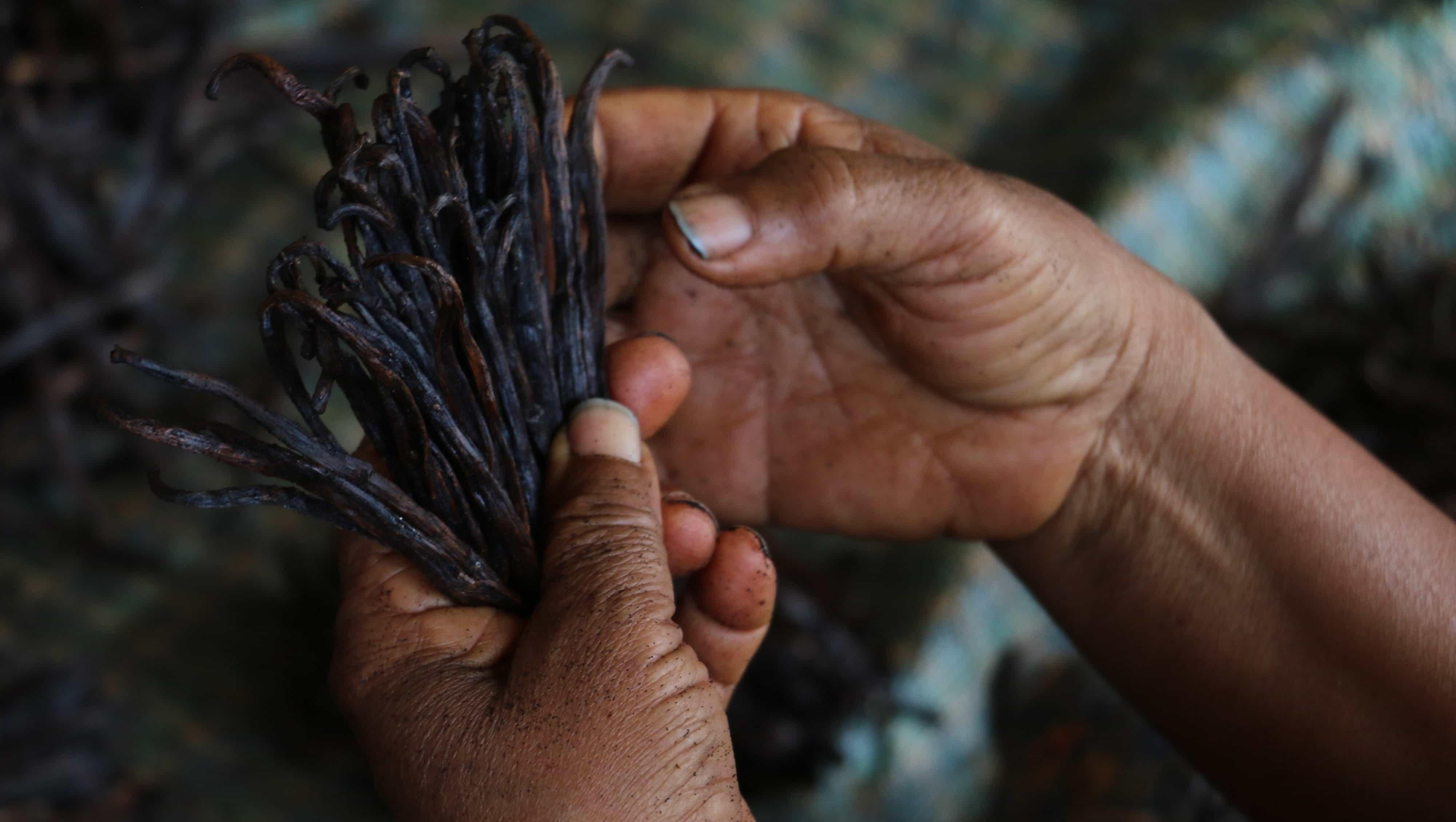 Vaniljens skjulte pris – bundløs gæld og børnearbejde