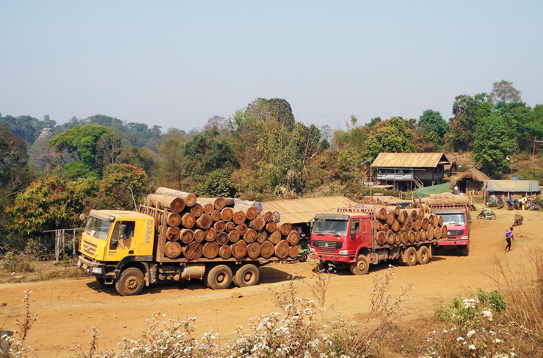 Myanmars illegale tømmer kommer til Danmark