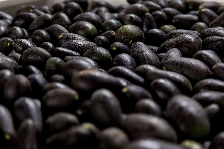 avocado mountain