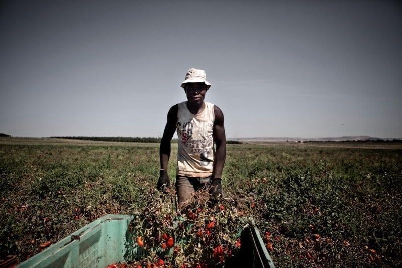 Hvad er supermarkedernes ansvar, når en tomatplukker dør i deres varekæde?