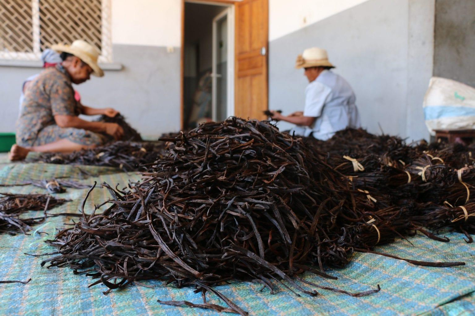 Børnearbejde, bundløs gæld og tyveri af vanilje er udbredt i Madagaskars vaniljeproduktion. Foto: Per Lykke Lind/Danwatch