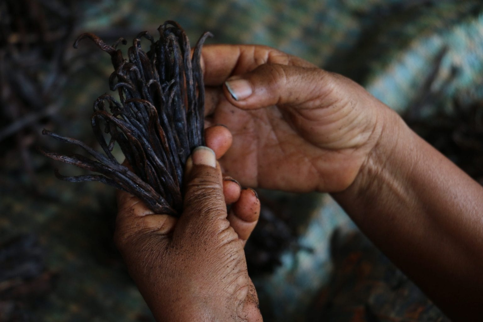 Der er mange mellemhandlere i vaniljens varekæde, og det gør det svært at kontrollere, hvor vaniljen kommer fra. Foto: Per Lykke Lind/Danwatch