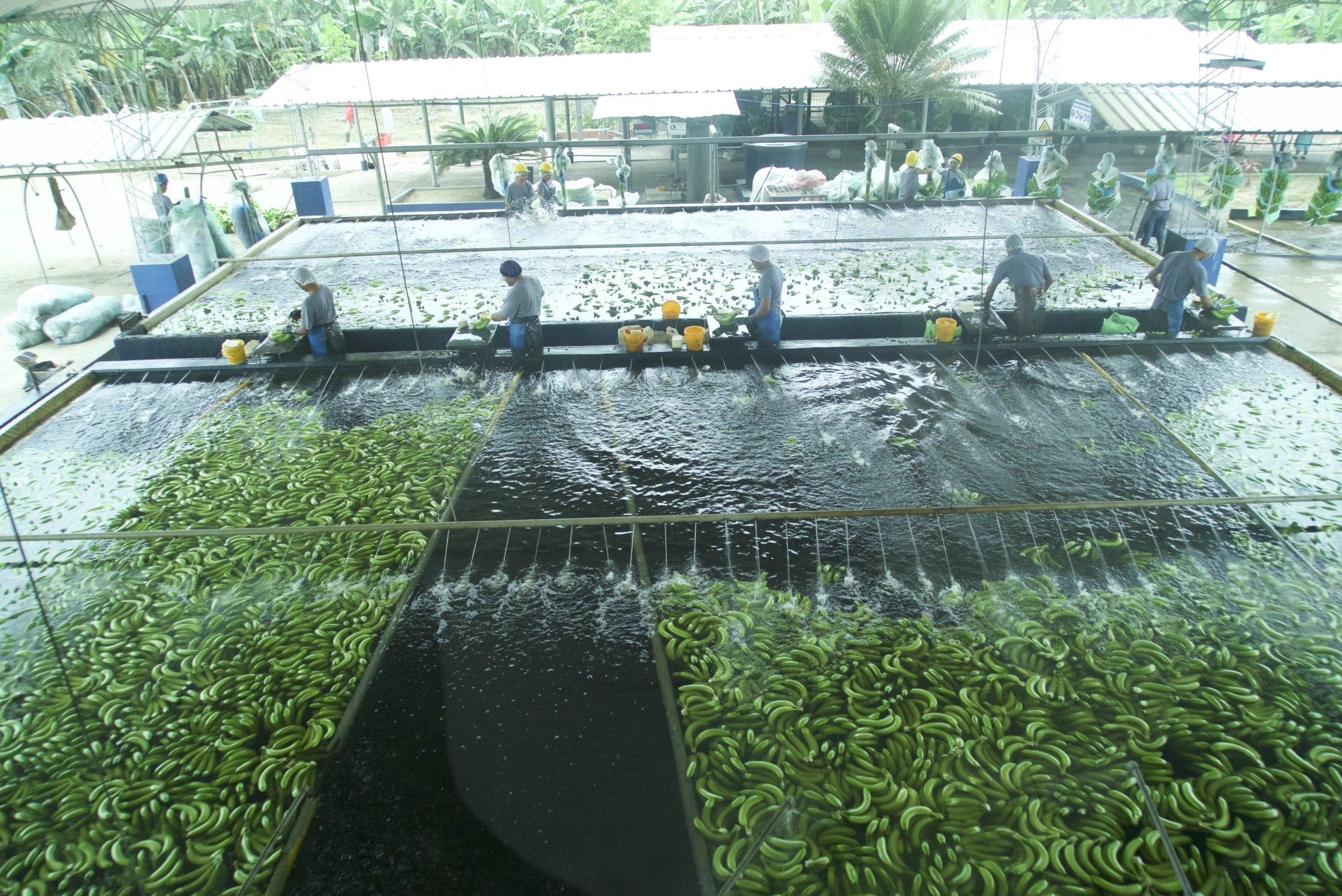 Mange af indbyggerne lever af at arbejde på plantagerne, og er i daglig kontakt med de farlige pesticider.
