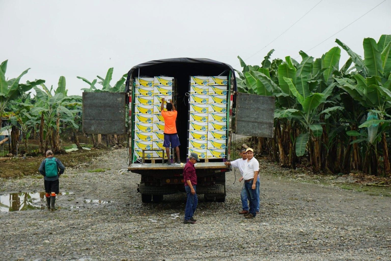 Banankasser på vej til deres destination, supermarkederne. EU som blok er den største aftager af ecuadorianske bananer.