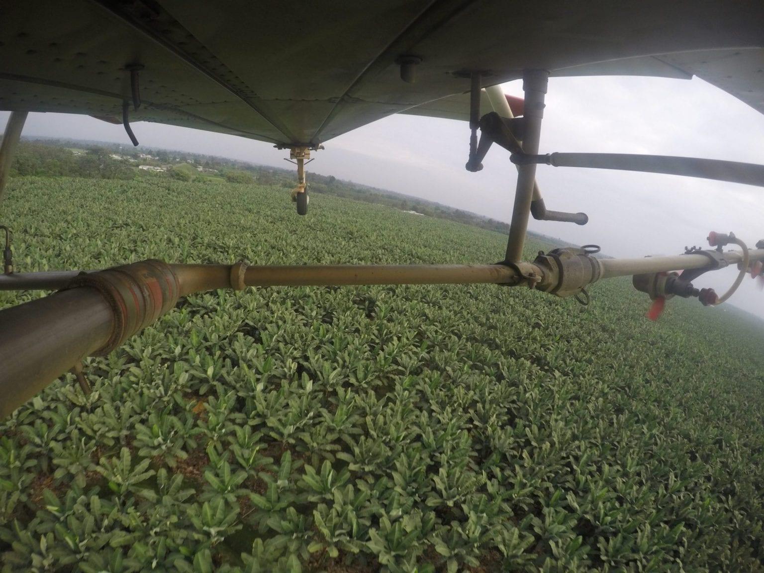 Her ses et af flyene, der sprøjter pesticider over området.