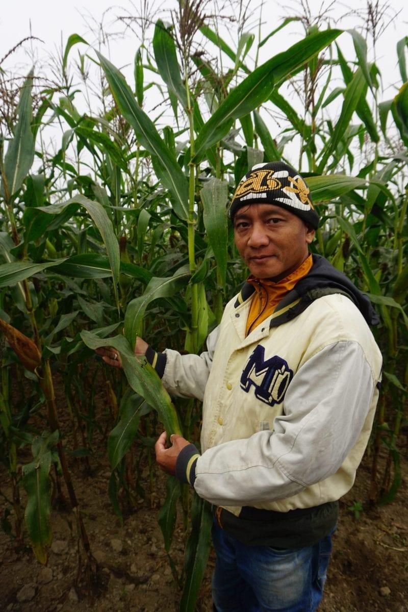 Rohit Pulami, en anden af bryggeriets naboer, viser sine majsplanter frem.