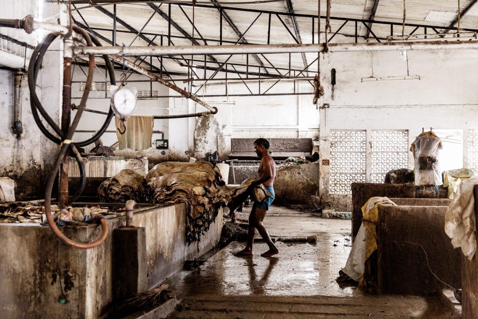På garverierne bliver rå skind lavet om til færdigt læder. Læderet ender bla. på danske tøjmærkers fabrikker i Indien. Foto: Uffe Weng
