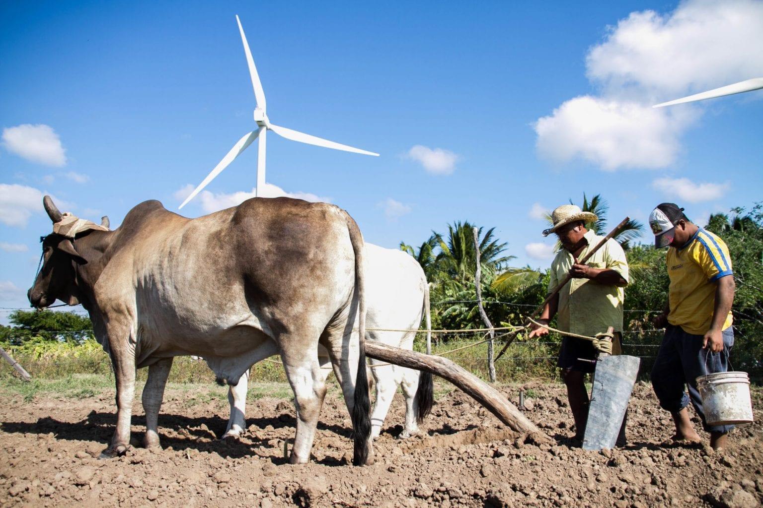 Oaxaca er Mexicos største vind-mekka. Internationale firmaer har foreløbig bygget 27 vindmølleparker i Oaxaca. Danske Vestas er hovedentreprenør på det kontroversielle megaprojekt Eólica del Sur. Foto: Santiago Navarro/Thuthout.org
