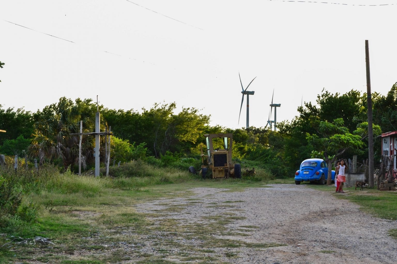De oprindelige folk i Oaxaca brugte det område, hvor der nu står 132 Vestas vindmøller, til at græsse deres dyr, dyrke deres grøntsager samt til at samle planter og dyr til traditionel medicin. Foto: Wrongkindofgreen.org