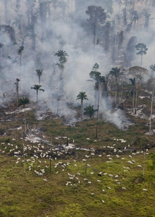 Smoke from man made forest fires to clear land for cattle or crops.