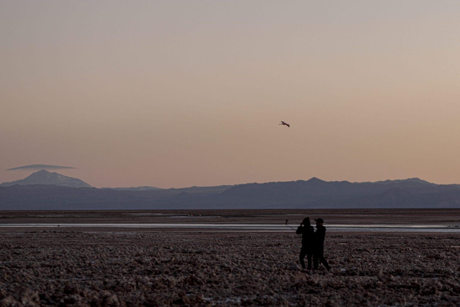 Et stigende antal turister lægger også pres på Atacamas vandressourcer. Her en flamingo i luften over en selfie-stang.