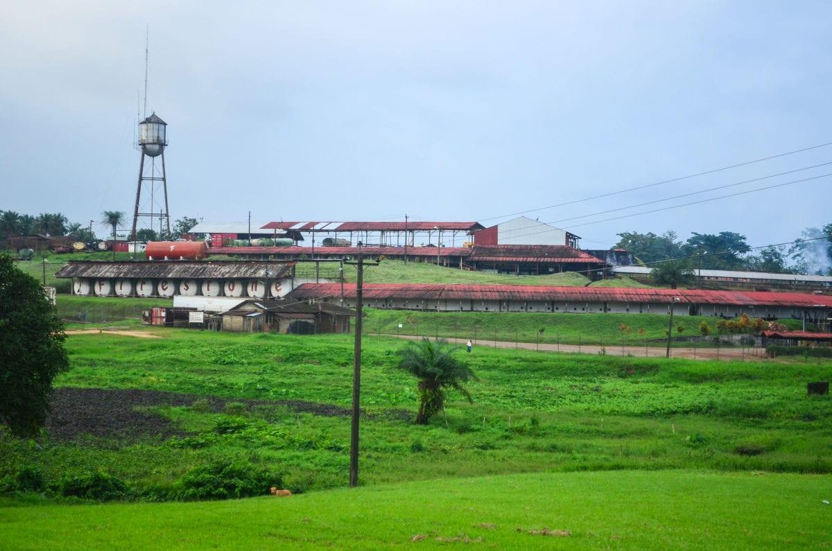 Firestones gummiplantage er den største sammenhængende gummiplantage i verden. I alt dækker den 10 procent af alt dyrkbart land i Liberia. Men derudover opkøber Firestone også gummi fra små lokale gummiproducenter Foto: Jbdodane, Flickr