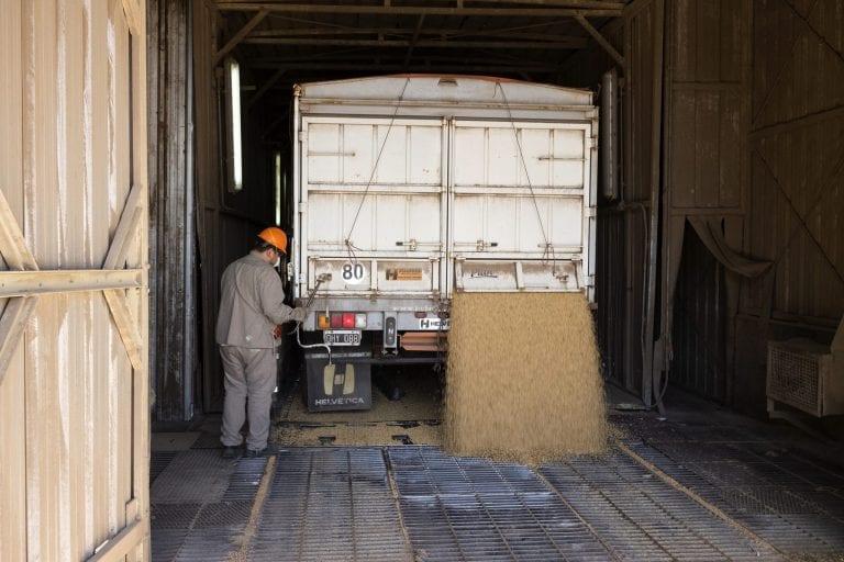 Lastbiler proppet til randen med sojakorn bliver kørt ind på en rampe. Forenden bliver løftet og sojaen glider derefter ned i en rist.